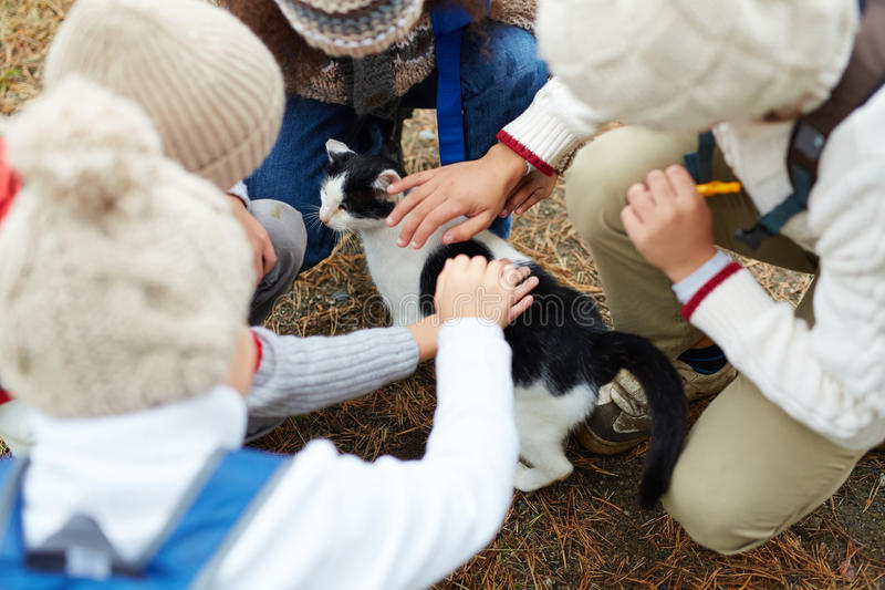 Kids Petting Cat Outdoors royalty free stock photos