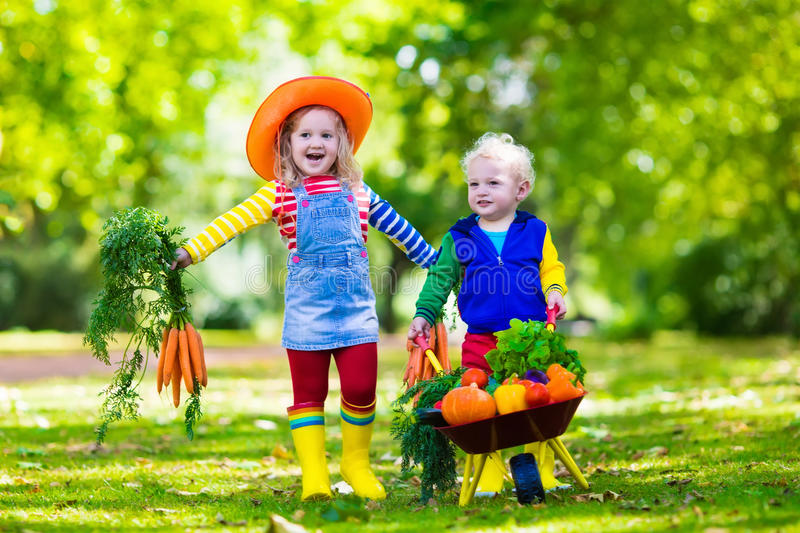 Kids picking vegetables on organic farm royalty free stock image