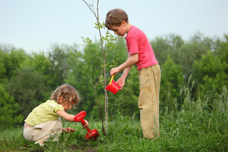 Kids plant the tree stock photo