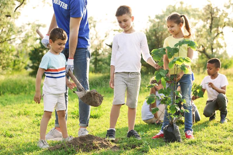 Kids planting tree with volunteer royalty free stock photography