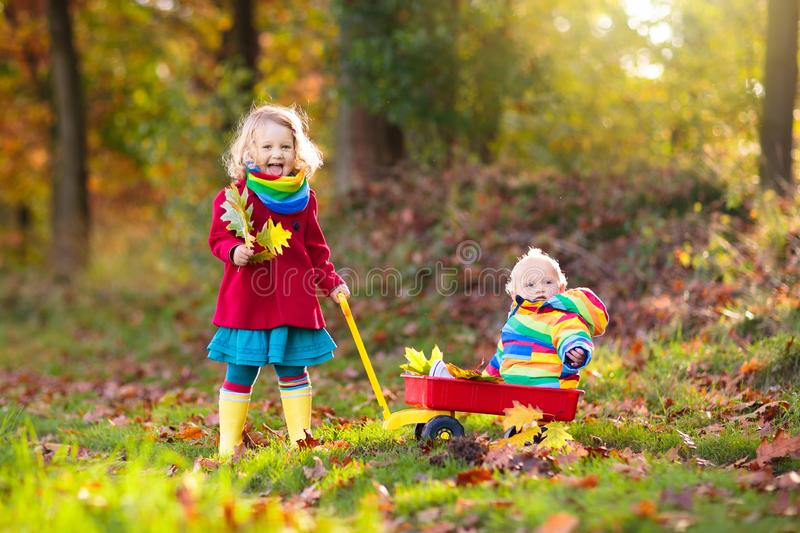 Kids play in autumn park. Children outdoor in fall. Kids play in autumn park. Child picking yellow maple leaves in sunny forest. Little girl with wheelbarrow royalty free stock images