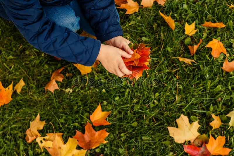Kids play in autumn park. Children throwing yellow and red leaves. Little child in blue coat with maple leaves. Fall stock photography