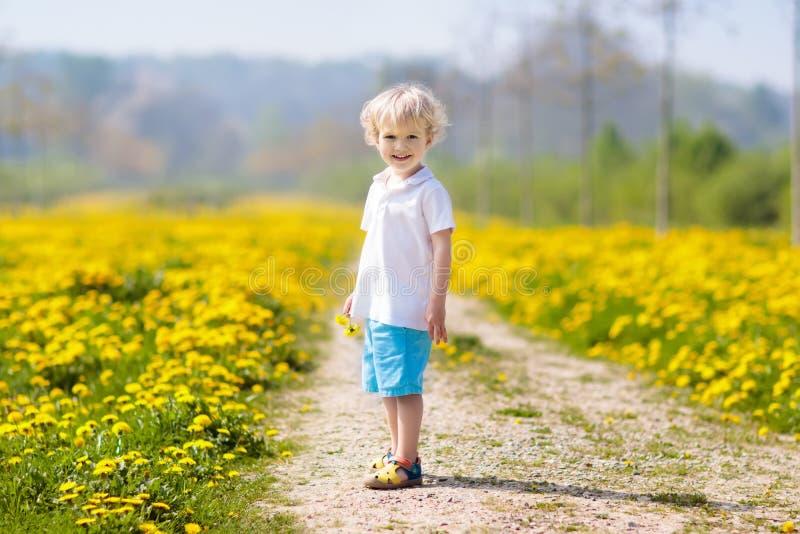 Kids play. Child in dandelion field. Summer flower. Kids play in yellow dandelion field. Child picking summer flowers. Little boy running in spring dandelions stock images