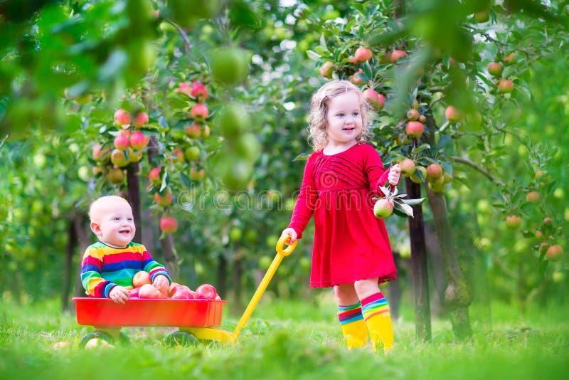 Kids playing in apple garden stock image