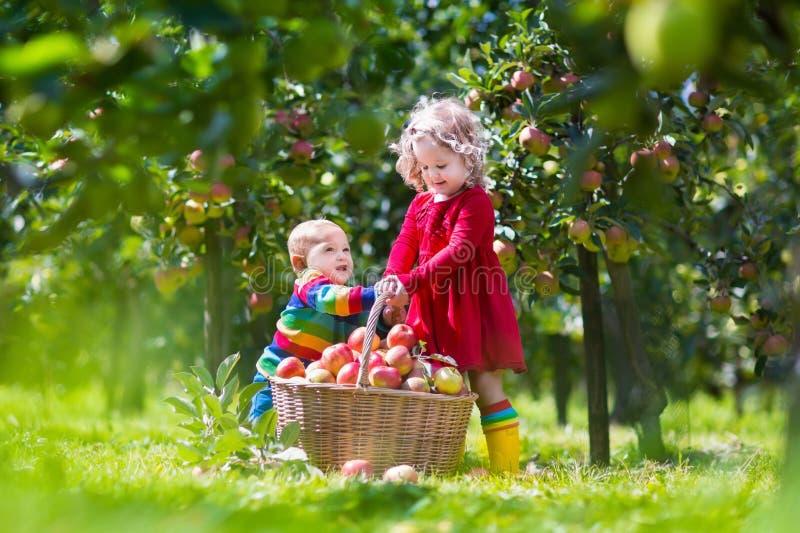Kids playing in apple tree garden stock photo