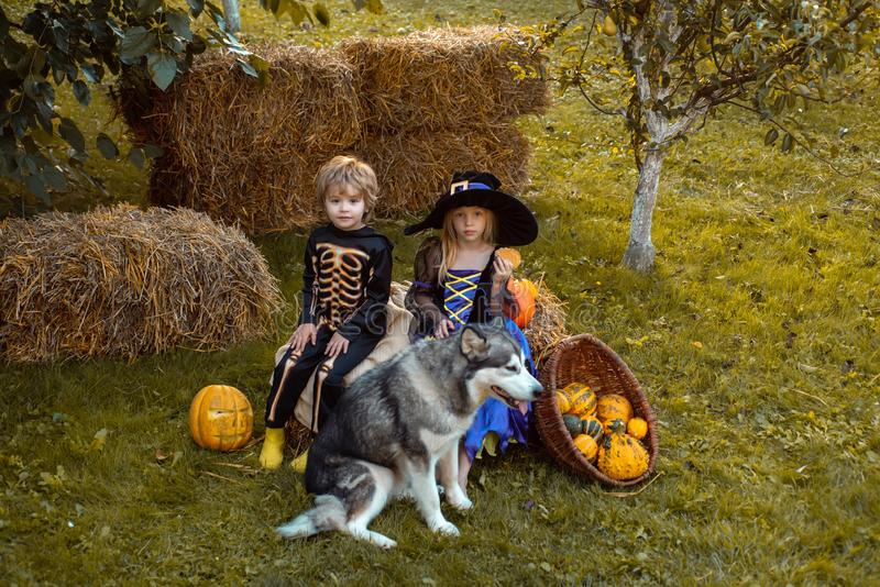 Kids smiling on a Halloween party. Halloween children enjoying in the autumn park on field. Surprised group little stock image