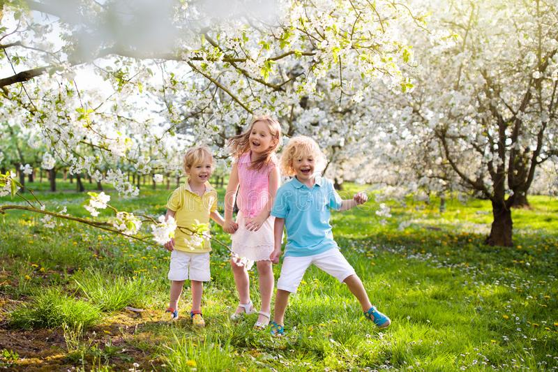 Kids in spring park. Child at blooming cherry tree. Kids playing in spring park. Children running in sunny garden with blooming cherry and apple trees. Boy and royalty free stock photos