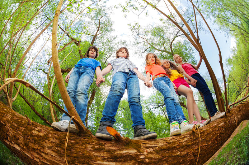 Kids standing together on trunk of fallen tree. Bottom view portrait of five teenage kids standing together holding hands on trunk of fallen tree in summer stock photo
