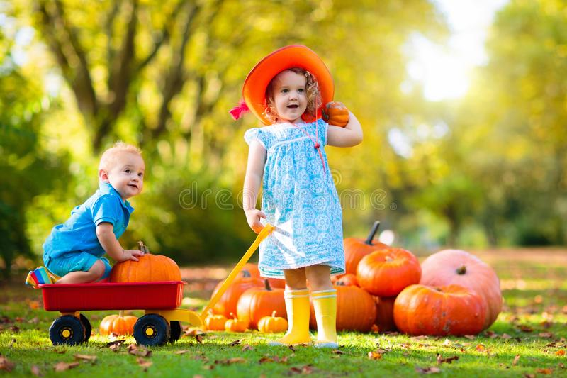Kids having fun at pumpkin patch. Kids trick or treat on Halloween. Little child, girl and boy at pumpkin patch. Thanksgiving time fun for family stock photo