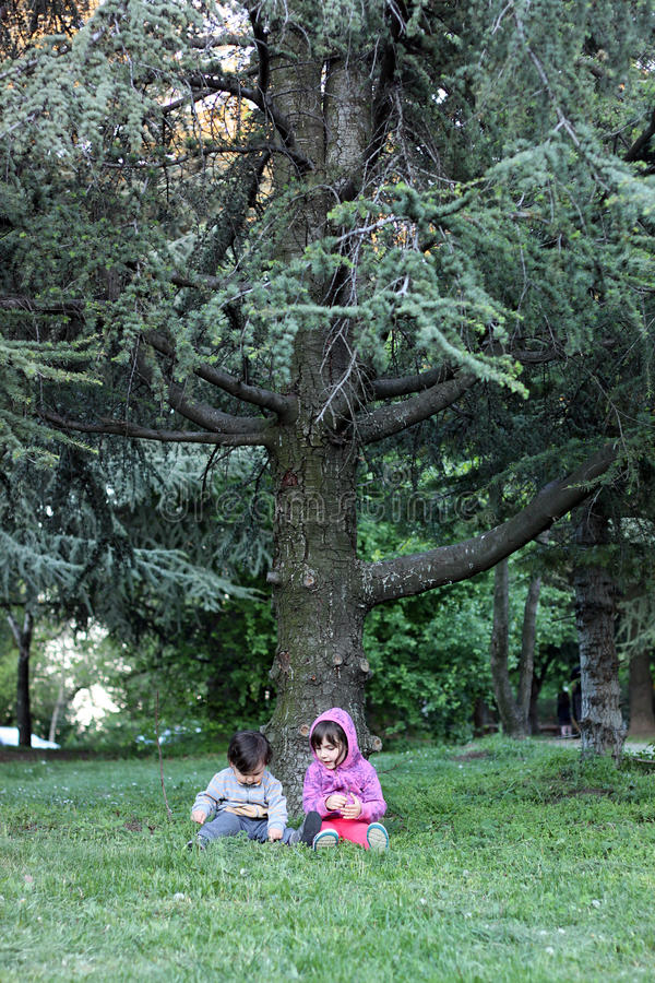Kids under pine tree royalty free stock photography