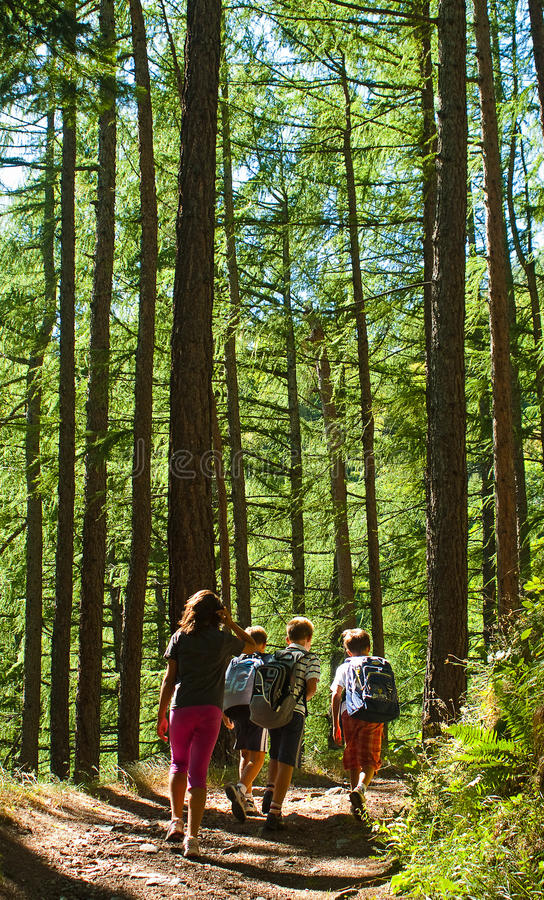 Download Kids walking in mountain stock photo. Image of national - 26389548