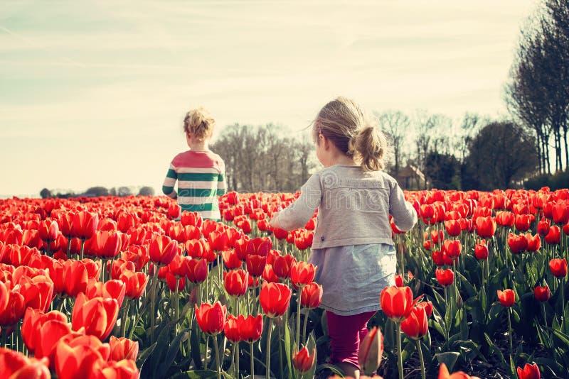 2 Kids Walking on Red Tulip Garden Under Blu Sky royalty free stock images