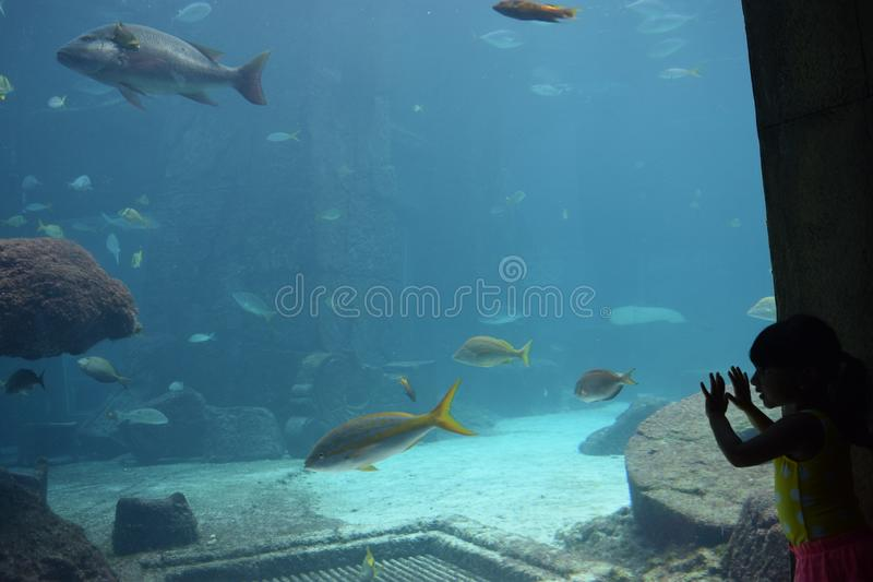 Kids Watch Fishes in Large Aquarium stock photo