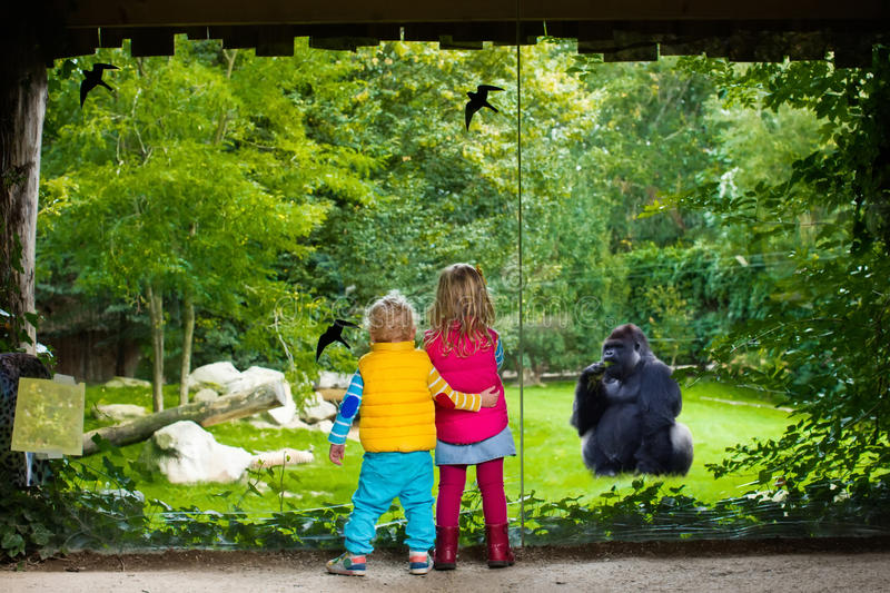 Kids watching animals in the zoo stock images