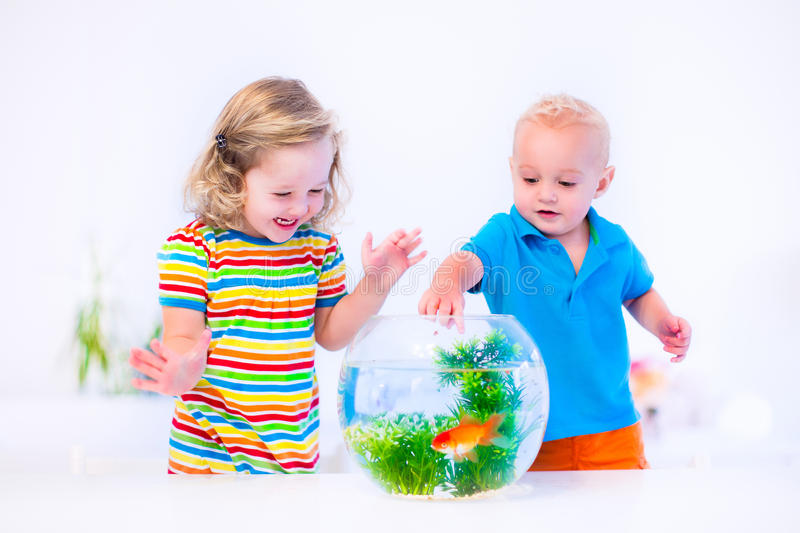 Kids watching fish bowl. Two children, brother and sister, cute little girl and adorable baby boy feeding a goldfish swimming in a round fish bowl aquarium stock image