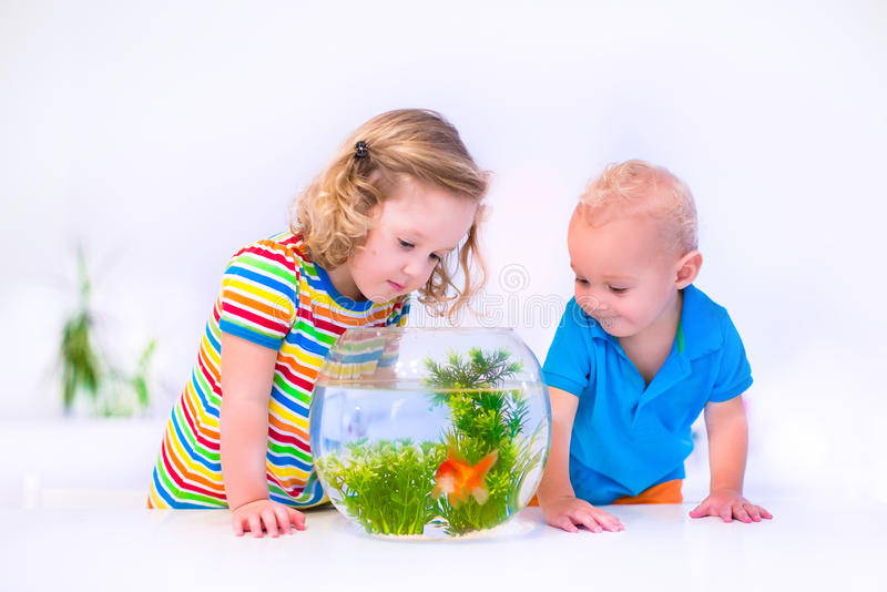 Kids watching fish bowl. Two children, brother and sister, cute little girl and adorable baby boy feeding a goldfish swimming in a round fish bowl aquarium stock images