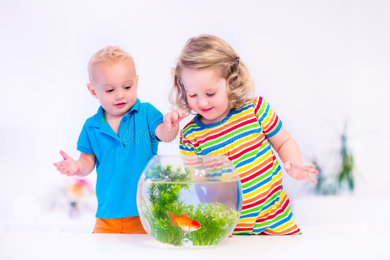 Kids watching fish bowl. Two children, brother and sister, cute little girl and adorable baby boy feeding a goldfish swimming in a round fish bowl aquarium stock photos
