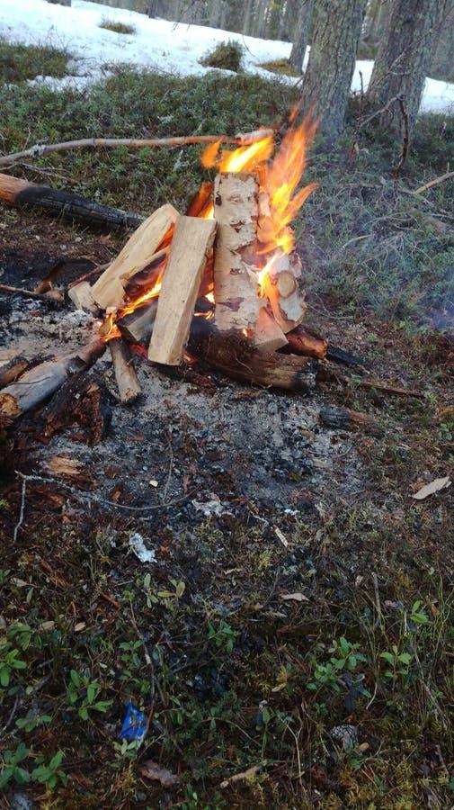 Kiełbasa ogień las zdjęcia stock