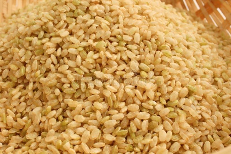 Kiełkujący Brown Rice zdjęcia stock