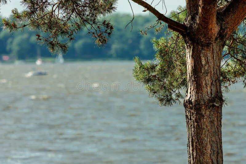 Kiefer auf dem See lizenzfreie stockfotos