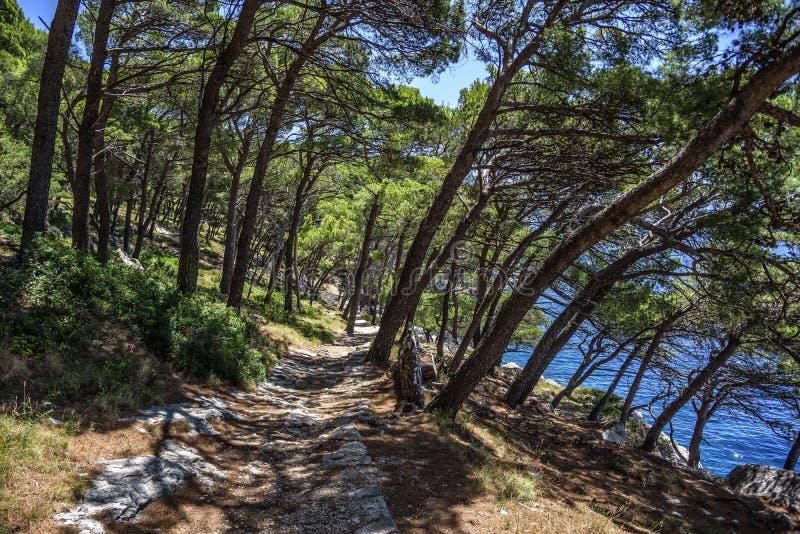 Kiefer auf dem Ufer des blauen Meeres Bild in den Herbstfarben kroatien lizenzfreies stockbild