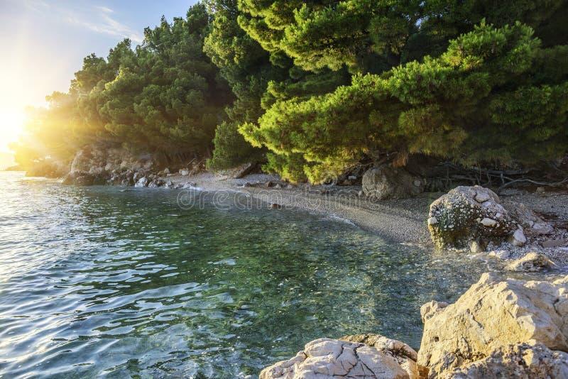 Kiefer auf dem Ufer des blauen Meeres Bild in den Herbstfarben kroatien stockfotografie