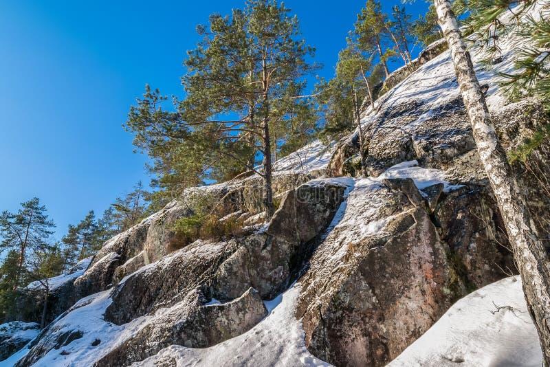 Kiefer auf Seite des schneebedeckten felsigen Berges lizenzfreies stockfoto
