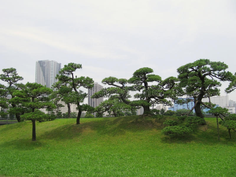Kiefer im Central Park von Tokyo stockbild