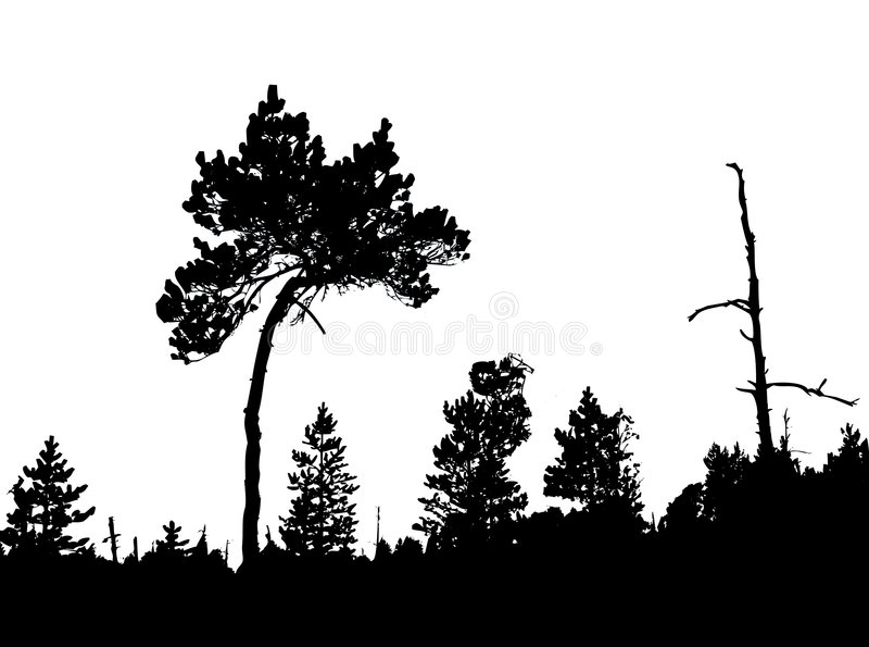 Kiefer im Holz lizenzfreie abbildung