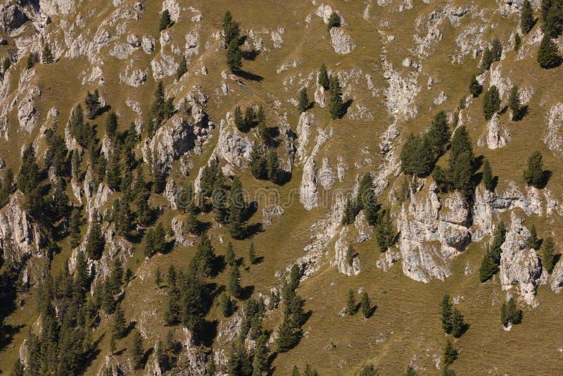 Kiefer lang eine lehnende Seite eines Berges als Beschaffenheit lizenzfreies stockfoto