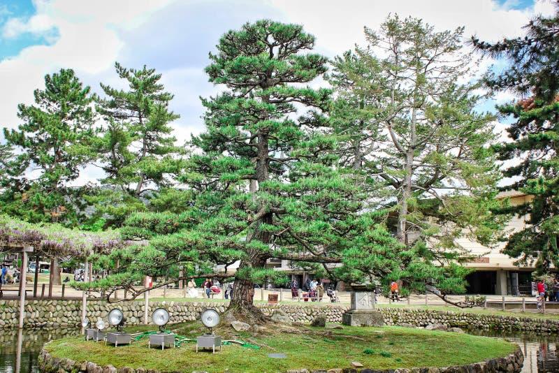 Kiefer mitten in dem See gelegen in Nara, Japan lizenzfreie stockbilder