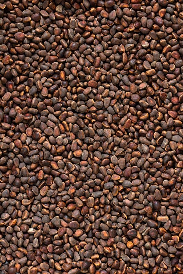 Kiefer, Nuss, Samen, Zeder, Brown, natürlich, Lebensmittel, stockfotos