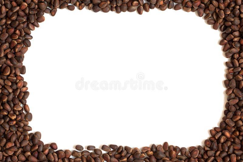 Kiefer, Nuss, Samen, Zeder, Brown, natürlich, Lebensmittel, Weiß, Rahmen, lizenzfreie stockbilder