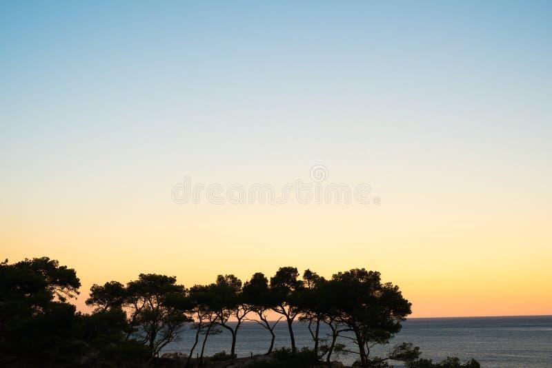 Kiefer-Schattenbild-Sonnenuntergang stockbilder