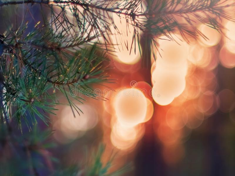 Kiefer-Tannenzweig in den Winter-Forest Colorful Blurred Warm Christmas-Lichtern im Hintergrund Dekoration, Konzept des Entwurfes stockfotografie