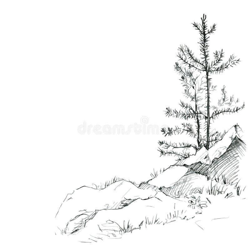 Kiefer und Felsen lizenzfreie abbildung