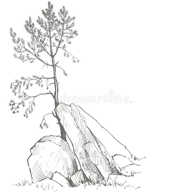 Kiefer und Felsen stock abbildung