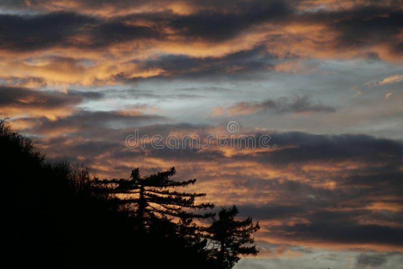 Kiefer und goldener Sonnenuntergang lizenzfreies stockfoto