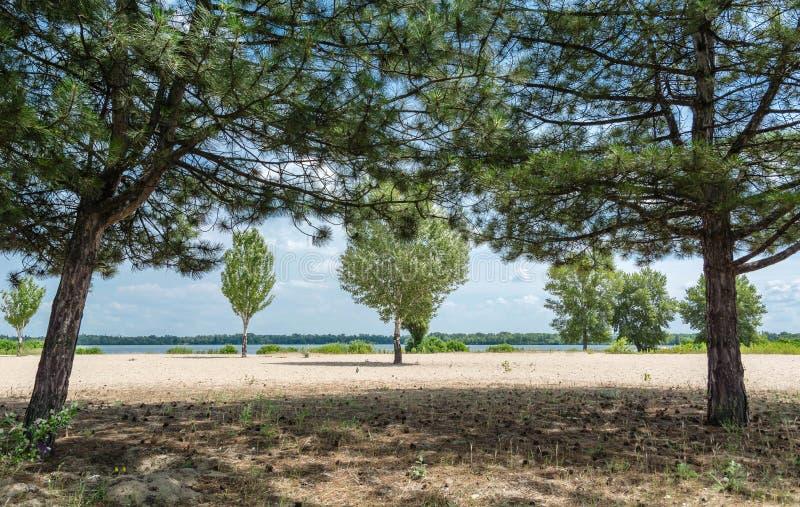 Kiefer und Laubbäume, die vor dem Fluss, Sand wachsen lizenzfreie stockfotos