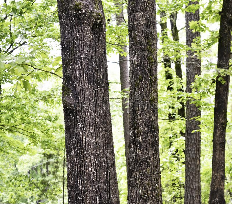 Kiefer und verschiedene laubwechselnde Vielzahl im kleinen Waldgebiet stockfotos