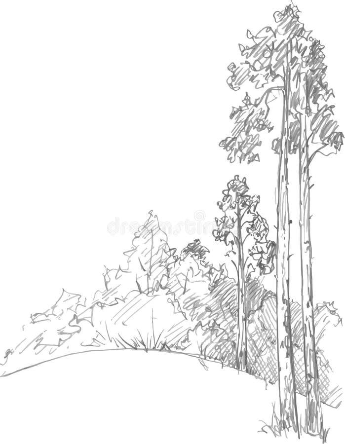 Kiefer und Wald lizenzfreie abbildung