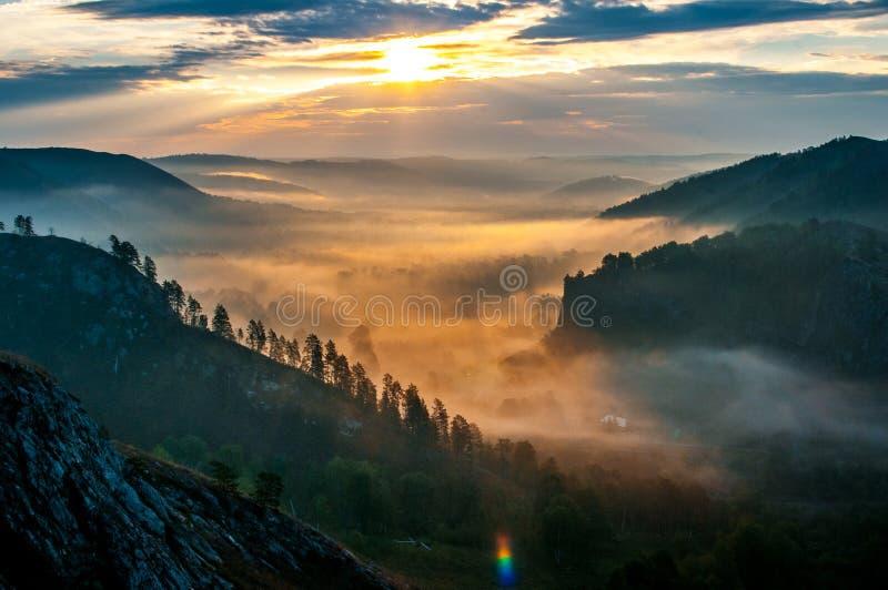 Kiefern eingehüllt in Nebel in den Strahlen von Dämmerung stockfoto