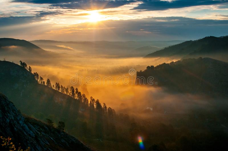 Kiefern eingehüllt in Nebel in den Strahlen von Dämmerung lizenzfreies stockbild