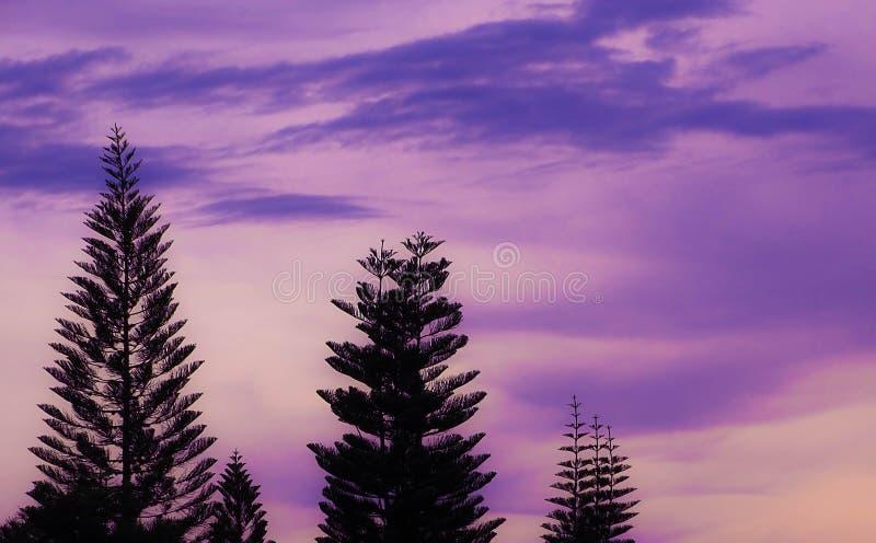 Kiefern-Sonnenuntergang lizenzfreies stockbild