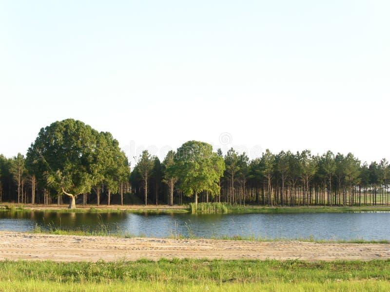 Kiefern u. Teich stockbilder