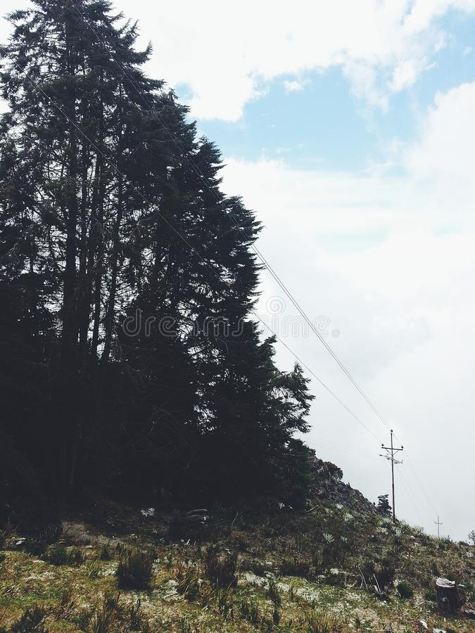 Kiefern und der blaue Himmel lizenzfreie stockbilder