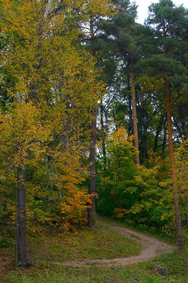 Kiefern und Lindens auf einem Hügel das Mischholz stockbilder