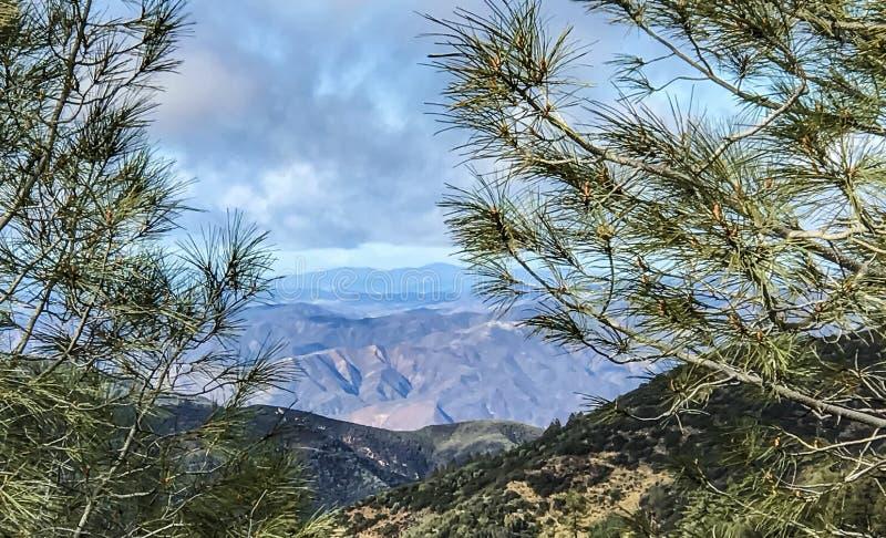 Kiefern und Täler in Kalifornien lizenzfreies stockbild