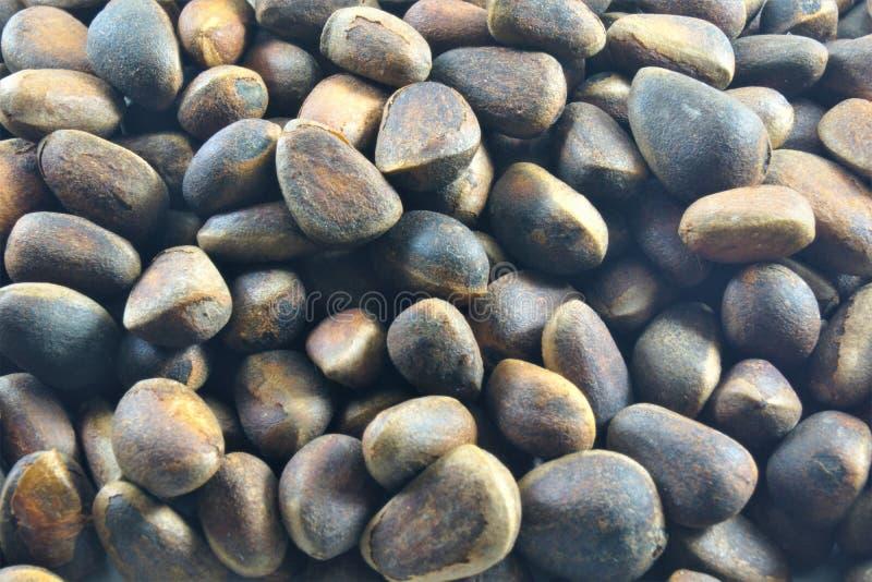 Kiefernnuß ist eine essbare Frucht, die von den Kiefernkegeln extrahiert wird stockfoto