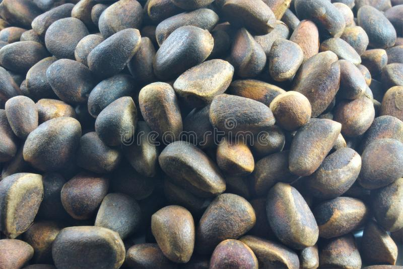 Kiefernnuß ist eine essbare Frucht, die von den Kiefernkegeln extrahiert wird lizenzfreie stockfotografie